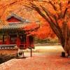 Tour du lịch Hàn Quốc: Seoul – Everland – Nami – Seoul (5 Ngày)