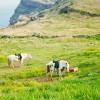 Du lịch Hàn Quốc tết 2014 Đảo Jeju – Lắng đọng yêu thương