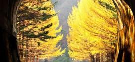 Khám phá mùa thu Hàn Quốc