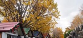 Khám phá mùa thu Busan